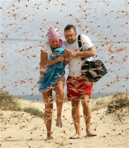 стая бабочек или стрекоз может напасть на человека