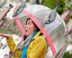 дожди из рыб и лягушек - природное явление