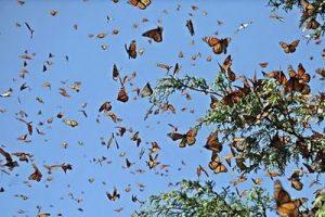 хаотичные движения характерны для бабочек