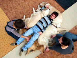 эффективным средством лечения кинофобии является взаимодействие с собаками, к которому подходят постепенно