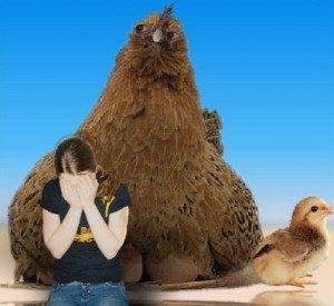 Боязнь кур