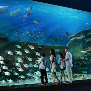 победить ихтиофобию помогает наблюдение за ними в аквариуме