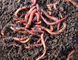 черви имеют неприятный вид