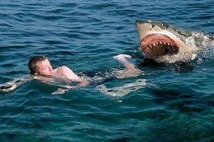 Страх акул