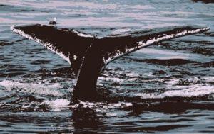Страх перед китами