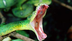 змеи могут внушать пожизненный страх
