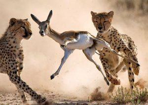 оборонительное поведение у животных