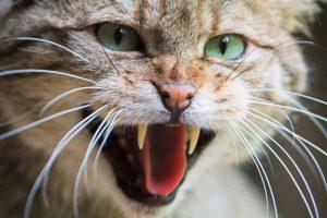 оборонная реакция у домашних животных