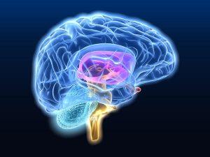 схема мозговой цепи