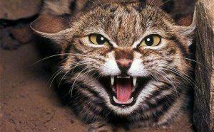 сигнал об опасности активирует систему тревоги у кошки