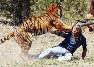 борьба человека с хищником
