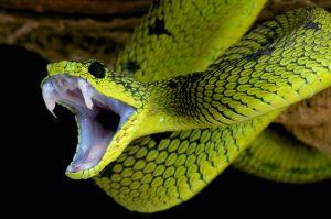 змей боится множество людей