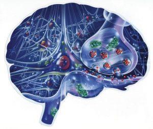 обработка событий в мозге