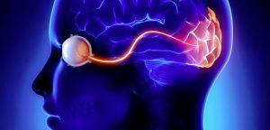 при возникновении угрозы активируется работа мозга
