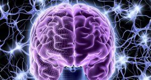 мозг развивается в течение всей жизни
