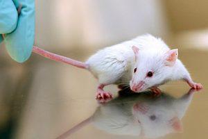 исследования боязни у крыс