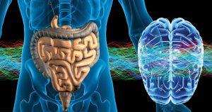 китайская медицина отождествляет желудок с мозгом