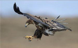 нападение птиц может вызвать фобию