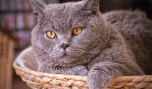 кошки могут вызывать страх у зоофобов