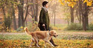 проглука с собакой уменьшает тревогу