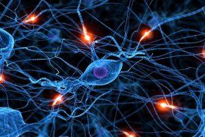 активность нейронов в гипоталамусе