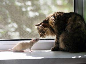 у животных с отсутствием гена страха нет боязни